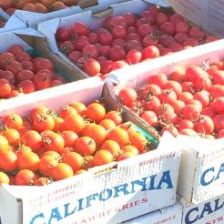 farm-tour-ca-tomatoes-hedoesxrayidofood