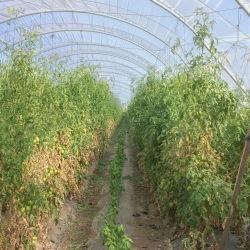 farm-tour-tomato-row-hedoesxrayidofood